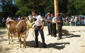 Ocenjevanje živali na razstavi goveda leta 2007 (fotografija: N. Gabrenja)