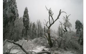Pred sanacijo posledic žledoloma morate obvestiti revirnega gozdarja. (foto: Wikipedija)