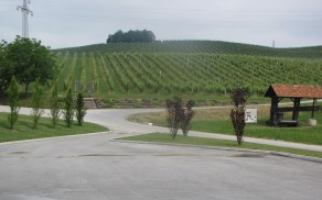 Zlati grič - vinogradi