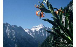 Prihaja 8. mednarodni festival alpskega cvetja