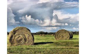 bala_seno_kmetijstvo.jpg
