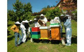 Vsako leto se povečuje število čebelarskih krožkov