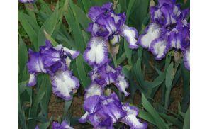 botaninivrt2009020.jpg