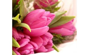 cvetje.jpg