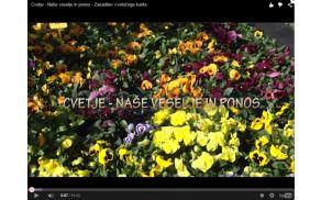 cvetjekorita.jpg