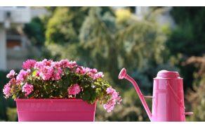 cvetlica.jpg