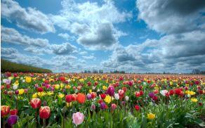 cvetlicni_vrt.jpg