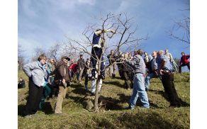 Obrezovanje sadnega drevja (Foto: Breda Medvešček)