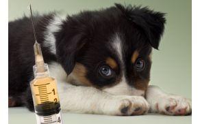 dog-vaccination-schedule.jpg
