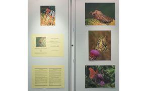 V svetu žuželk in pajkov, fotografska razstava