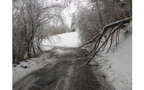 Podrta drevesa so onemogočala prevoz. Fotografija je s Srednjega. Foto: Dora Ravnik