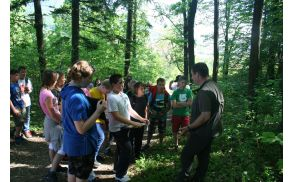 V Sloveniji imamo iglaste, listnate in mešane gozdove.