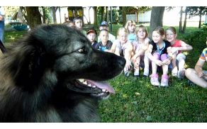 Učenci iz Podgorja in Šmiklavža so obiskali revijo športnih pasem psov