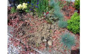 Posledice odtujitve grmičkov in rož