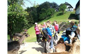 Krmljenje jelenov in muflonov.