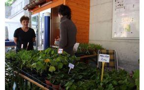 Pridelava domače hrane postaja vse pomembnejša. Foto: Toni Dugorepec