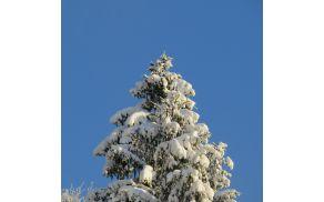 Zaradi napovedi obilnega sneženja in vetra pouk odpade