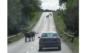 Živali na cesti