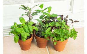 kitchen-herb-garden.jpg