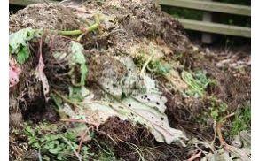 kompost.jpg