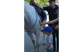 konjenik.jpg