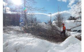 Odstranjevanje drevja na parkirišču pri Krimu.