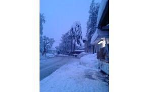 Podrto drevje na glavni avtobusni postaji.