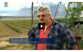 Kmetija Lesjak, Ojstriška vas.