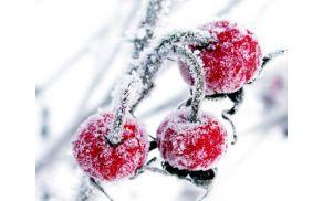 nasveti-zima-2014-1.jpg