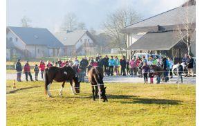 Predstavitev terapije s konji. Foto: Roman Pekovec