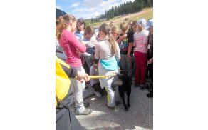 Učenci so si ogledali tudi nekaj reševalnih psov. Foto: Maja Fajdiga