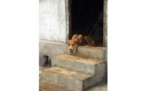 Prijavimo domnevno zanemarjanje ali mučenje živali - vir fotografije: sxc.hu