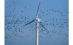 Rezila vetrnic ubijejo tisoče ptic letno.