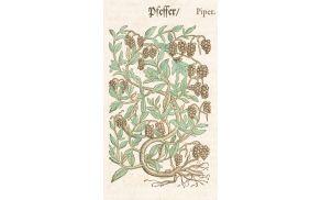 Poper je stoletja veljal za luksuzno začimbo in so ga uporabljali samo najbogatejši. Vir: Adam Loniceri, Kreuterbuch (1582), hrani Knjižnica Ivana Potrča Ptuj. Foto: Boris Farič