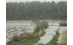 Poplavljena polja na Ajševici. Foto: CZ Severne Primorske