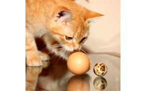 Jajčka so precej manjša, a za hišnega muca zaradi pik bolj zanimiva.