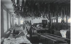 Sortiranje in sušenje kož v tovarni Runo, leta 1932