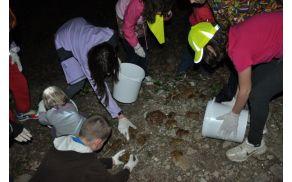 Reševanje žab. Foto: Helena Orlič