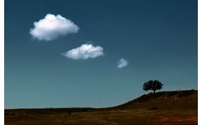 the_thinking_tree_by_gilad.jpg