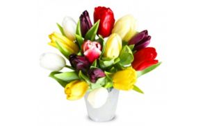 tulipani_mala.jpg