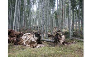 Vetrolom, foto: Zavod za gozdove Bled