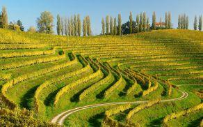 17. februarja je minilo 20 let od ustanovitve Društva vinogradnikov in sadjarjev Haloze.