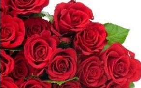 vrtnice.jpg