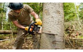zaganje_dreves.jpg