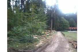 Žarišče lubadarja v »zdraviliškem« gozdu, ki žal nenačrtno spreminja njegovo podobo