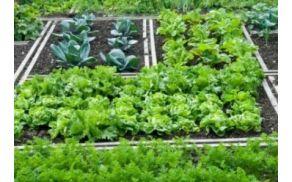 zelenjavni_vrt_v_juliju.jpg