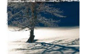 zimskiurniki.jpg
