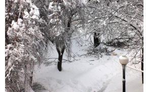 Žled in sneg drevju nista prizanesla.