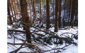 V kanalski občini je žledolom poškodoval več tisoč metrov lesa. Foto: R. Ravnik