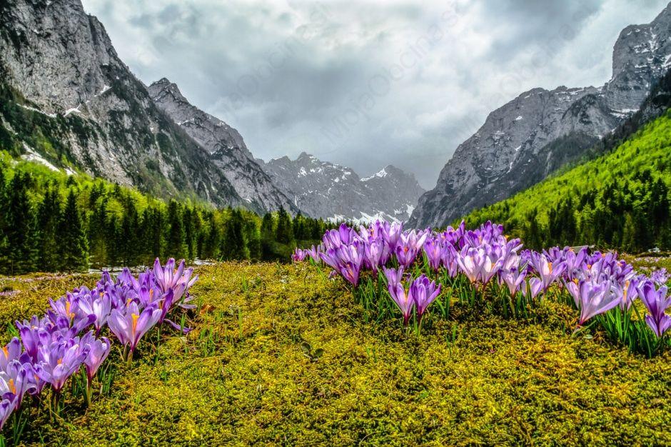 Razstava v Infocentru Triglavska roža Bled